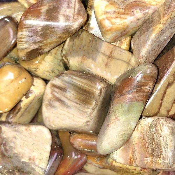 Petrified wood/med